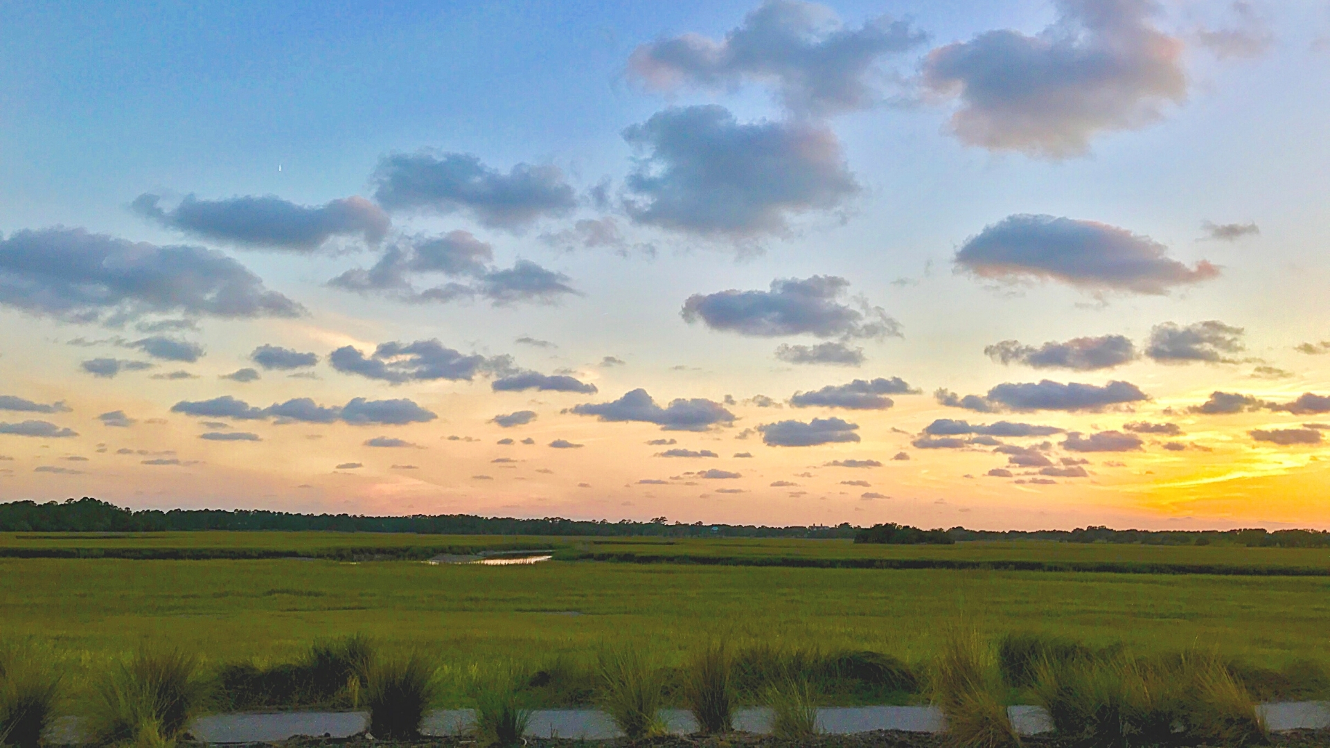 View from Kiawah Island Bike Trail to Freshfields Village