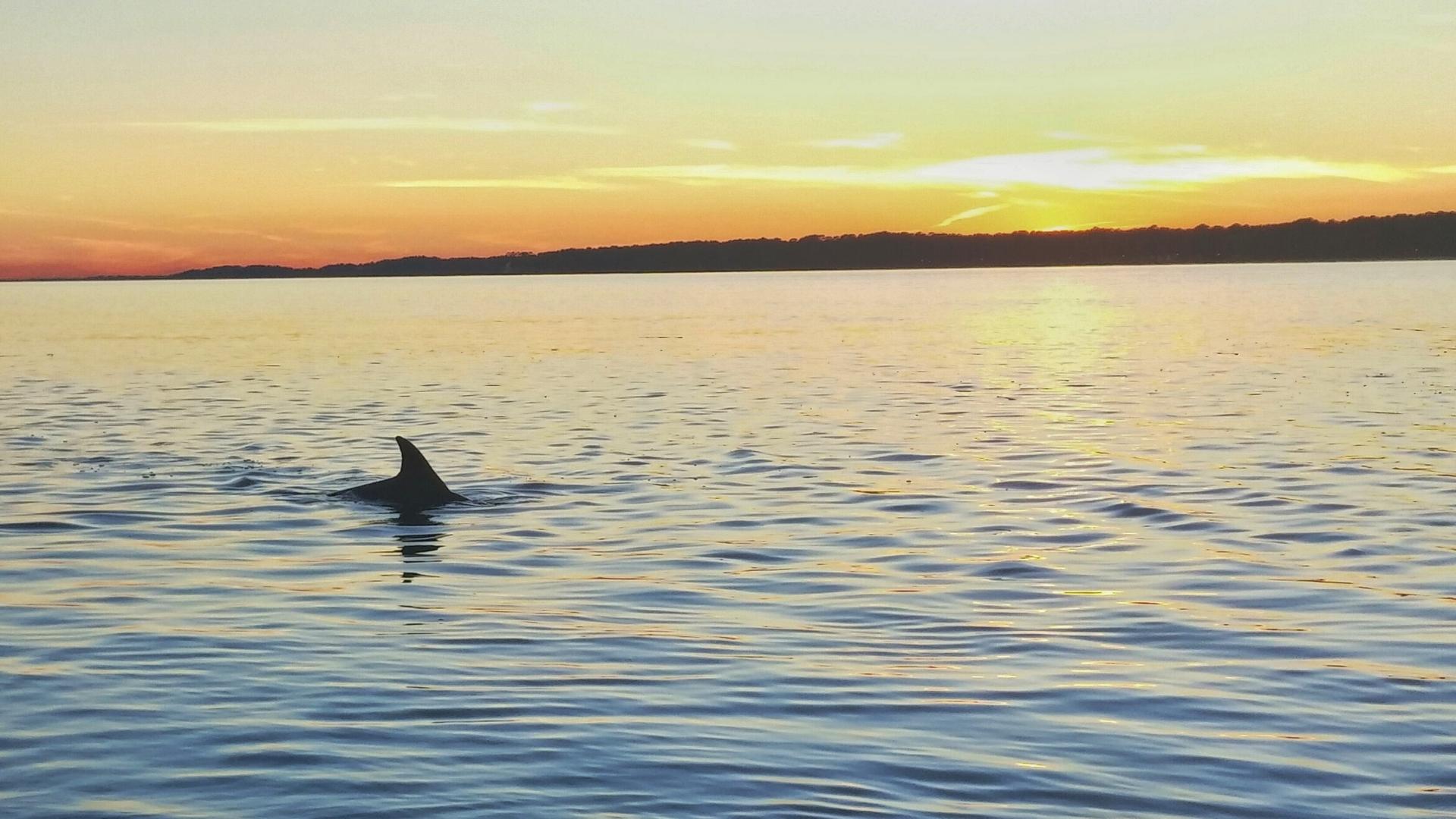 Atlantic Bottlenose Dolphin at Sunset