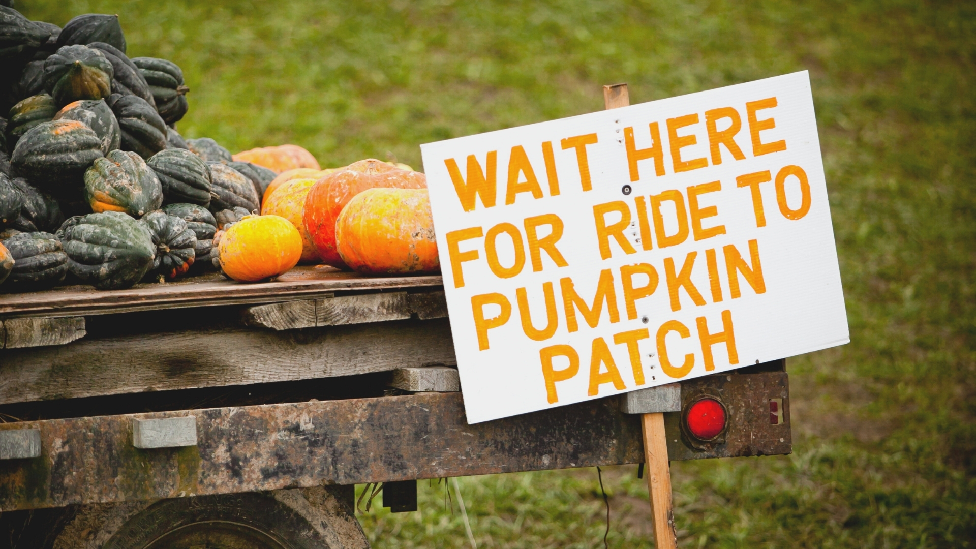 Fall Activity in Charleston SC - Pumpkin Patch Ride