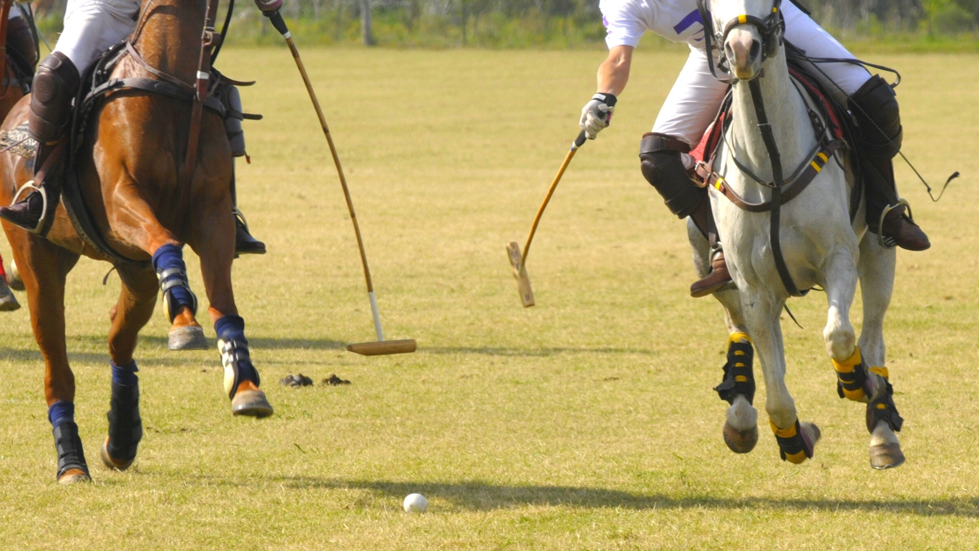 Annual Charleston Victory Cup Polo Match